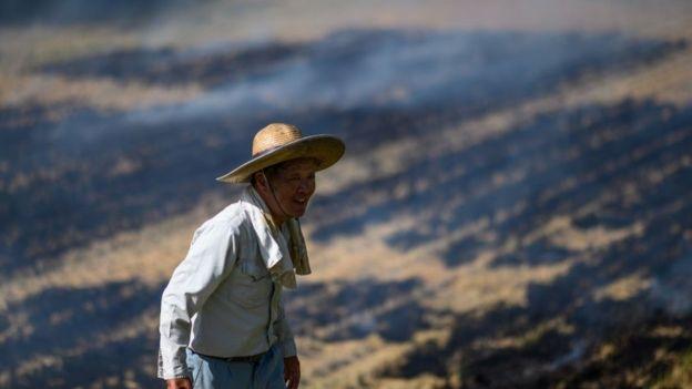 জাপানে কৃষকদের গড় বয়স ৬৭ বছর