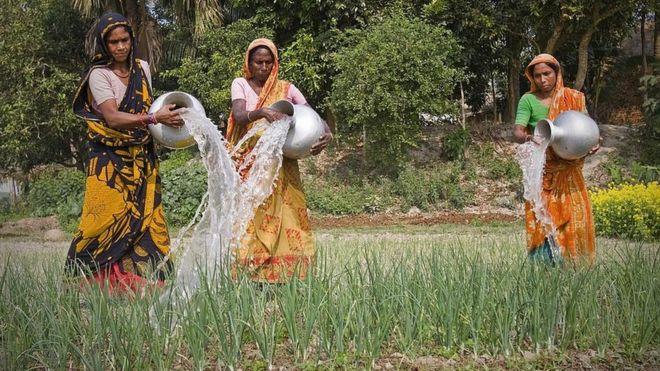 পেঁয়াজ: বাংলাদেশ কি পারবে ভারতের উপর নির্ভরতা কাটাতে?