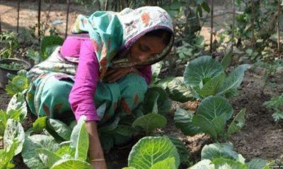 জলবায়ু পরিবর্তন: সবজি বাগানের মাধ্যমে যেভাবে লড়াই করছে সিলেটের নারীরা