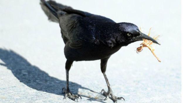 অনেক পাখীরই প্রধান খাদ্য হচ্ছে পোকামাকড়