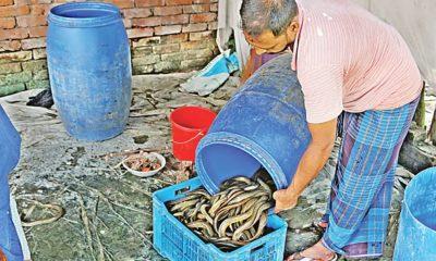 ওজন মাপার জন্য পাত্রে ঢালা হচ্ছে কুঁচিয়া। সম্প্রতি নারায়ণগঞ্জের রূপগঞ্জের গোলাকান্দাইল এলাকায়