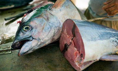 ক্যান্সারসহ হাজারো রোগের ঝুঁকি কমায় যেসব মাছ