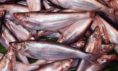 বাচা গোত্রের আর একটি মাছ ঘাউরা