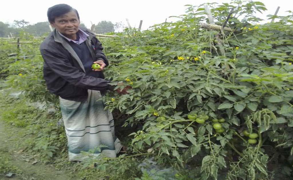ব্রাহ্মণবাড়িয়ায় সদর উপজেলার মোহাম্মদপুর গ্রামের কৃষক মহিউদ্দিন মিয়া