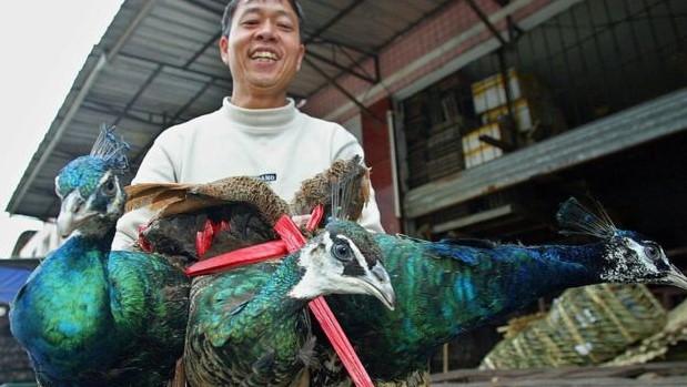 চীনের এক বন্যপ্রাণীর বাজারে ময়ুর বিক্রি করছেন এক ব্যক্তি