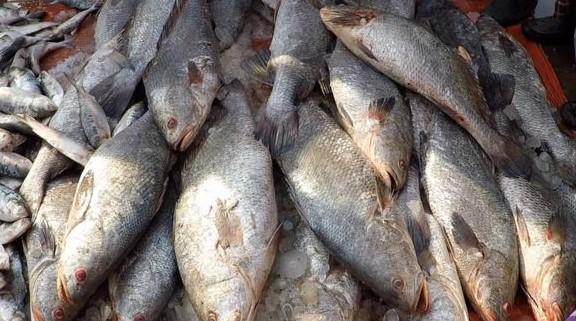 সমুদ্র বিজ্ঞানীরা বলছেন কয়েক প্রজাতির মাছ বিলুপ্তির মুখে পড়তে পারে