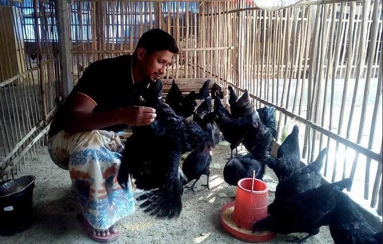 জানা যায়, এ জাতের মুরগির আদি নিবাস ইন্দোনেশিয়ার জাভা দ্বীপ। সেখানে এটাকে বলা হয় 'আয়্যাম কেমানি'।