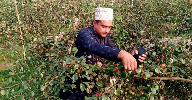 কাশ্মীরি আপেল কুল চাষে ১০ মাসে বদলে গেল প্রবাসীর ভাগ্য