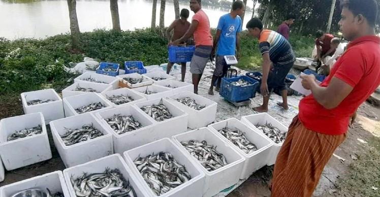 ১ কেজি পাবদা মাছ ৩৬০ টাকা, বাড়ছে চাষির সংখ্যা
