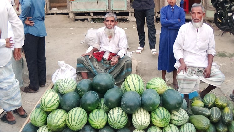 ভোলায় তরমুজের ফলনে কৃষকের মুখে হাসি