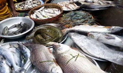 একদিনে ৭ কোটি ৭৩ লাখ টাকার মাছ বিক্রি
