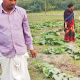 নিরাপদ সবজির গ্রাম সোনাখুলি