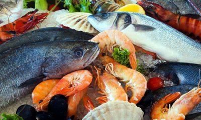 বঙ্গোপসাগরে আছে ৪৩০ প্রজাতির মাছ