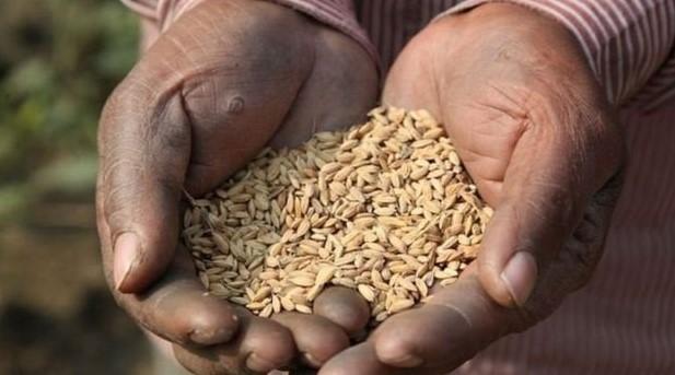 করোনাভাইরাস: বাংলাদেশে সম্ভাব্য খাদ্য বিপর্যয় এড়াতে সরকারের প্রস্তুতি কতটা?