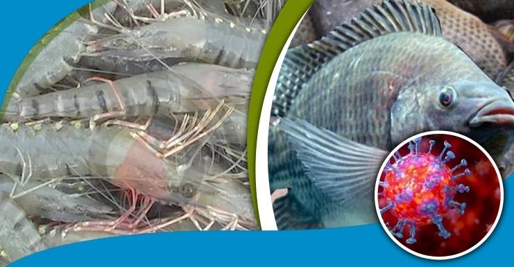 মাছে করোনা সংক্রমণের ঝুঁকি নেই, বললেন গবেষকরা