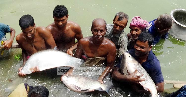মাছ চাষে বছরে ১২ লাখ টাকা লাভ করেন শিক্ষক আব্দুর রহিম