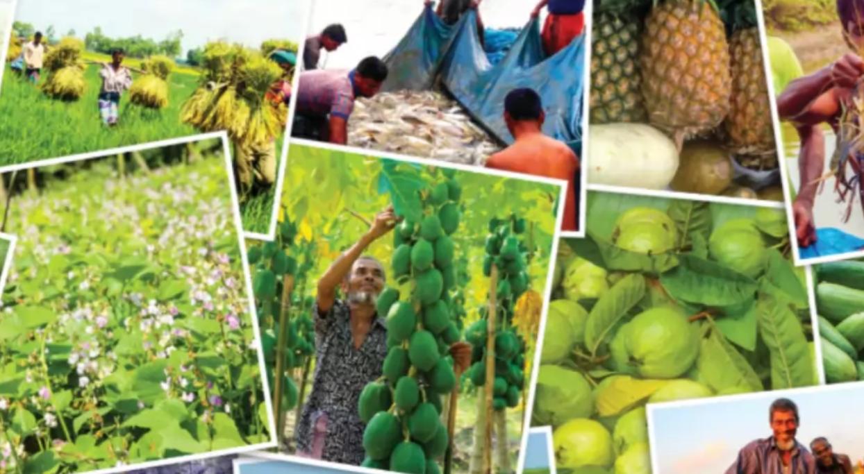 রুপালি-ফসলে-সোনালি-দিন