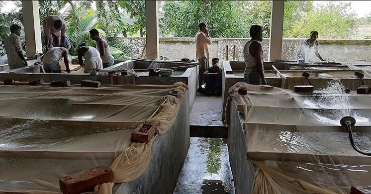 হালদাপাড়ের সরকারি হ্যাচারিগুলোতে কার্প জাতীয় মাছের ডিম ফুটিয়ে রেনু উৎপাদনের কর্মযজ্ঞ চলছে