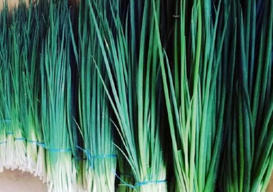 পেঁয়াজের চাহিদা মেটাতে পারে 'বারি পাতা পেঁয়াজ-১'