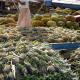 রাঙ্গামাটিতে মৌসুমি ফলের সমাহার