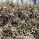 ১৪০ বিঘা জমির বাদাম নষ্ট হচ্ছে পানিতে
