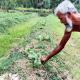 আদর্শ কুমিরমারা গ্রামের কৃষকেরা এখন নিঃস্ব