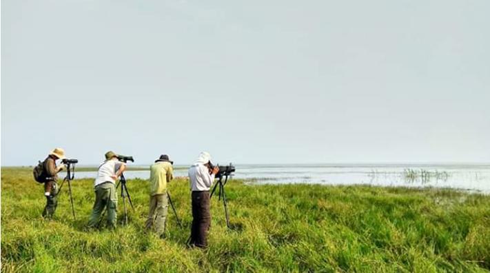 টাঙ্গুয়ার হাওরে দেখা গেল বিরল প্রজাতির পাখি