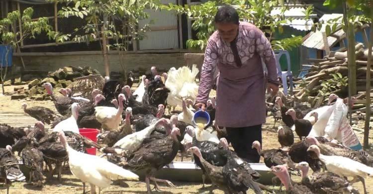 নোয়াখালীতে টার্কি চাষে স্বাবলম্বী কামাল