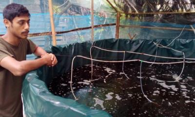 বায়োফ্লক পদ্ধতিতে মাছ চাষে সফল কলেজছাত্র মামুন
