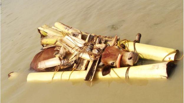 বিএসএফ বলছে, গলায় কলাগাছ বেঁধে নদীতে ভাসিয়ে দিয়ে চলছে ভারত থেকে গরুপাচার