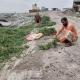 যমুনার পানিতে তলিয়ে গেছে চরের শত শত বিঘা বাদামের খেত