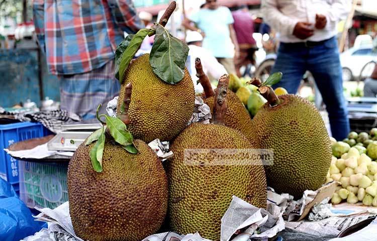 সুগন্ধময় রসালো ফল কাঁঠাল। দেশের প্রায় সব জেলাতেই এই ফল পাওয়া যায়। ছবি : মাহবুব আলম