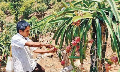 বান্দরবান-চিম্বুক সড়কের বসন্ত ম্রোপাড়ায় নিজের বাগানে কাজ করছেন তোয়ো ম্রো। সম্প্রতি তোলা ছবি। প্রথম আলো
