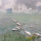 এক দিনে মরে ভেসে উঠেছে ৬ লাখ কেজি মাছ