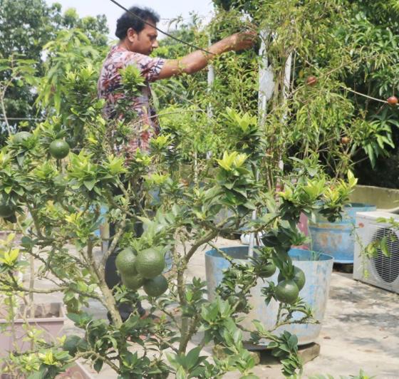 করোনাকাল, অখণ্ড অবসরে ব্যবসায়ী হলেন 'ছাদ কৃষক'
