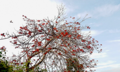 করোনাকালের বসন্ত