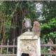 খাবারের খোঁজে লোকালয়ে বানরের দল