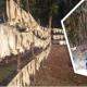 ধ্বংসের পথে 'সাদা সোনা' খ্যাত রাবার চাষ