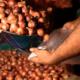 সীমান্তে আটকে থাকা পেঁয়াজের ট্রাক ছাড়ার অনুমতি দিল ভারত