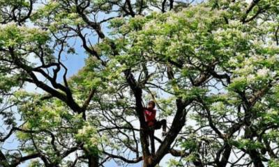 উদ্ভিদের প্রায় অর্ধেক প্রজাতিই বিলুপ্তির হুমকিতে