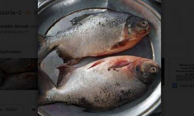 ডালায় সাজানো রাক্ষুসে পিরানহা মাছ