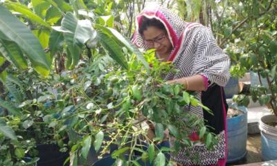 নারায়ণগঞ্জে বাড়ির ছাদে ফলদ বাগান