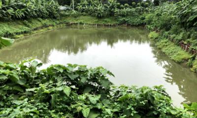 সরকারি পুকুরে 'মামার' পরিচয়ে চলছে মাছ চাষ