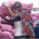চার বছরের মধ্যে পেঁয়াজ উৎপাদনে স্বয়ংসম্পূর্ণতায় রোড ম্যাপ