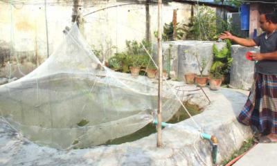 পুকুরের অর্ধেক খরচেই বাড়ির আঙিনায় মাছ চাষ