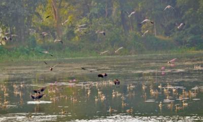 বন্ধ ক্যাম্পাসে প্রাণ ফিরিয়েছে পরিযায়ী পাখিরা