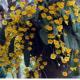 'অর্কিড' চাষ হতে পারে সম্ভাবনার নতুন দিগন্ত