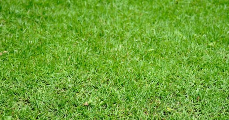 ঔষধি গাছ: চেনা যে একুশটি বৃক্ষ, লতা, গুল্ম, পাতা, ফুল ও ফলের রয়েছে রোগ সারানোর ক্ষমতা