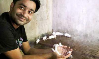 বাণিজ্যিকভাবে ইঁদুর চাষ করছেন রাবির ল্যাব সহকারী