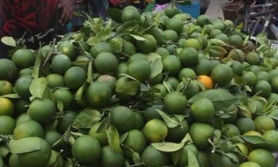 সুস্বাদু মাল্টায় একরপ্রতি মুনাফা লাখ টাকা